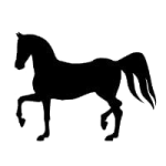 casino slang horse